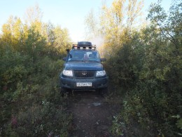 Лесопосадка у отворотки на Североморск-3