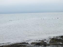 Тюлени наблюдают за нами