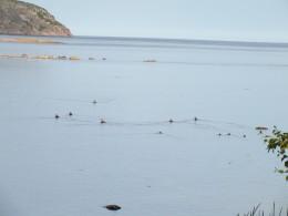Каждый день, на полной воде, птичий детсад выходил на прогулку