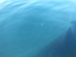 Подводная фауна