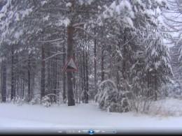 Дорожные знаки на деревьях