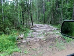 Пошли лесовозные просеки